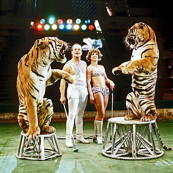 долорес запашная и тигры